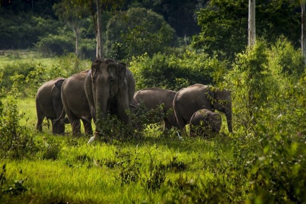 Tourism Authority of Thailand supports elephant welfare