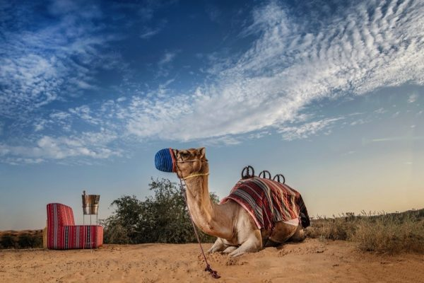 ENJOY A STARGAZING EXPERIENCE WITH A MOONLIGHT CAMEL RIDE